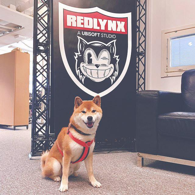 Office pets, Shiba Inu